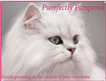 Purrfectly Pampered logo