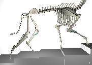 Torrington Orthopaedics