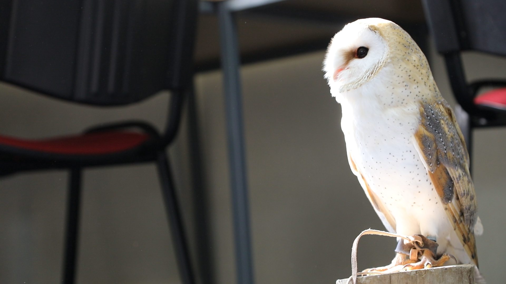 Owl at Careers With Animals Day