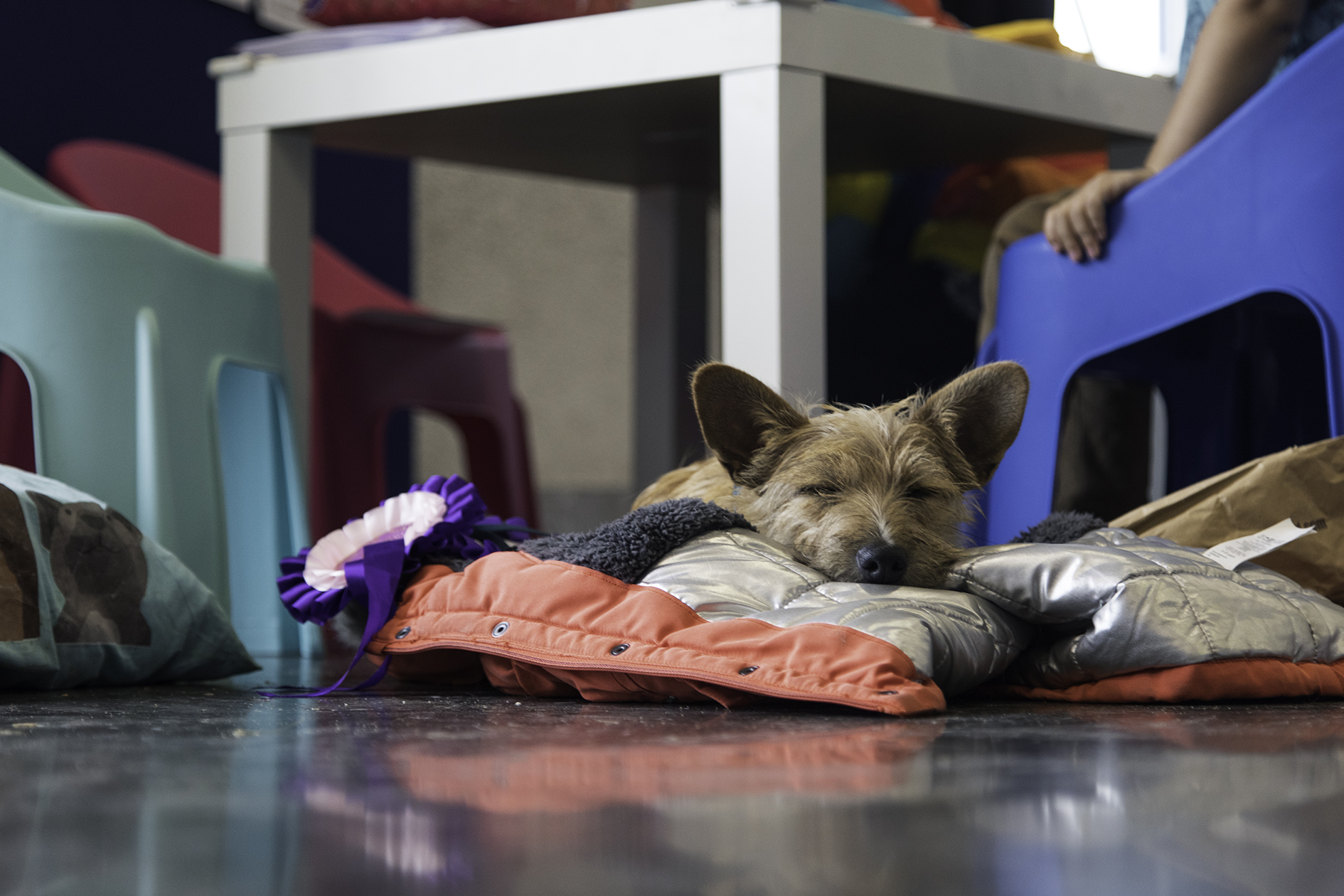 Dog sleeping at Careers With Animals Day